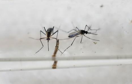 Virus Zika, patentes, plaguicidas, vacunas, microcefalias...  Mvd6742382