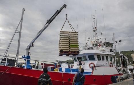 Drástica caída de las descargas de anchoa en los puertos vascos