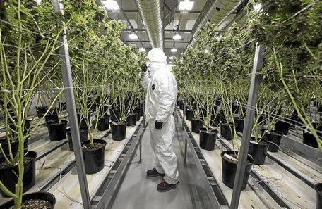 Libre comercio, sus repercusiones en el tráfico de drogas. - Página 7 UrreBerdeaBAT