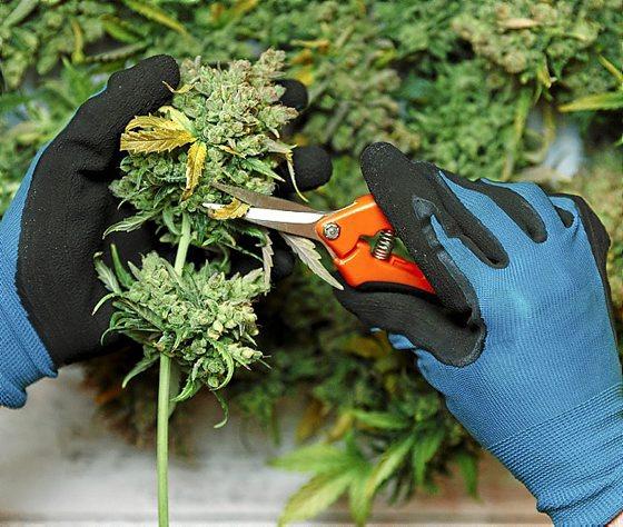 Libre comercio, sus repercusiones en el tráfico de drogas. - Página 6 0616_aurkibidea1