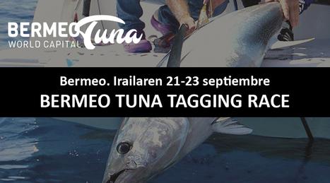 Bermeo_tuna