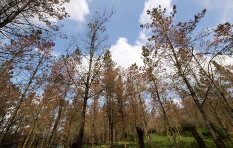 La Diputación de Bizkaia defiende la fumigación de pinos frente a las críticas de EH Bildu y Podemos