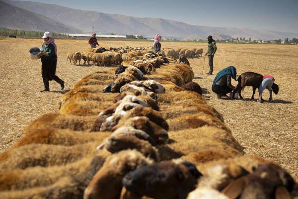 Líbano, Siria... proletari@s que nos oculta el $ 090_PArey7