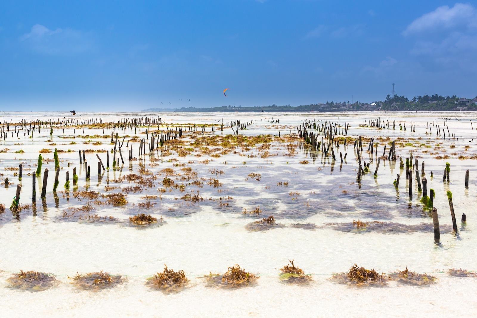 Granjeras de algas en el Índico (Zanzíbar [Tanzania]) Zanzibar1