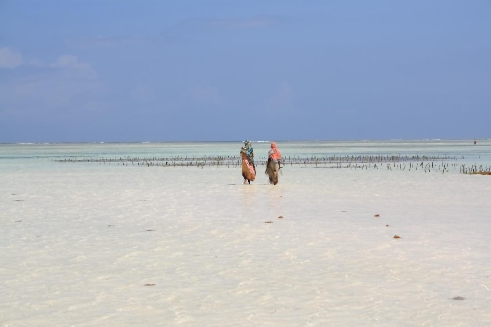 Granjeras de algas en el Índico (Zanzíbar [Tanzania]) Zanzibar6