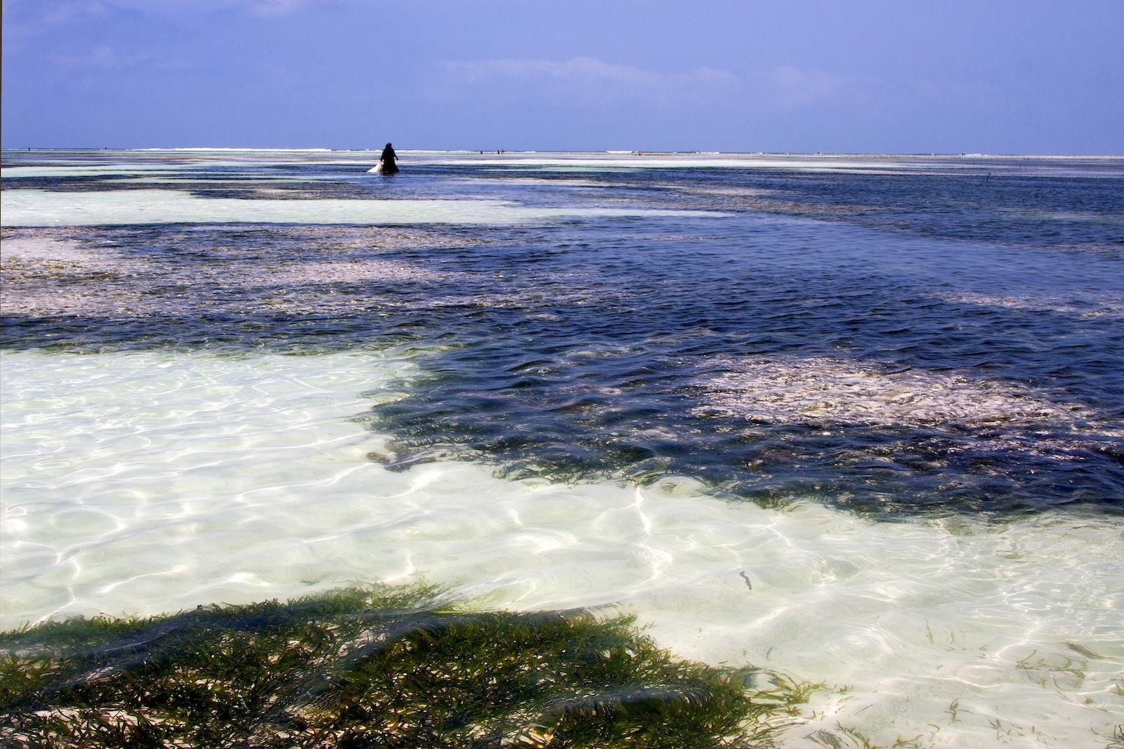 Granjeras de algas en el Índico (Zanzíbar [Tanzania]) Zanzibar4